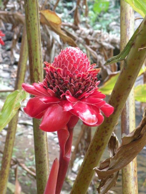 redflowerandgecko